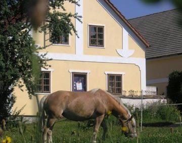 Wegwartehof – Hofladen , Kinderreitferien