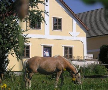 Thayarunde-Wegwartehof – Hofladen , Kinderreitferien